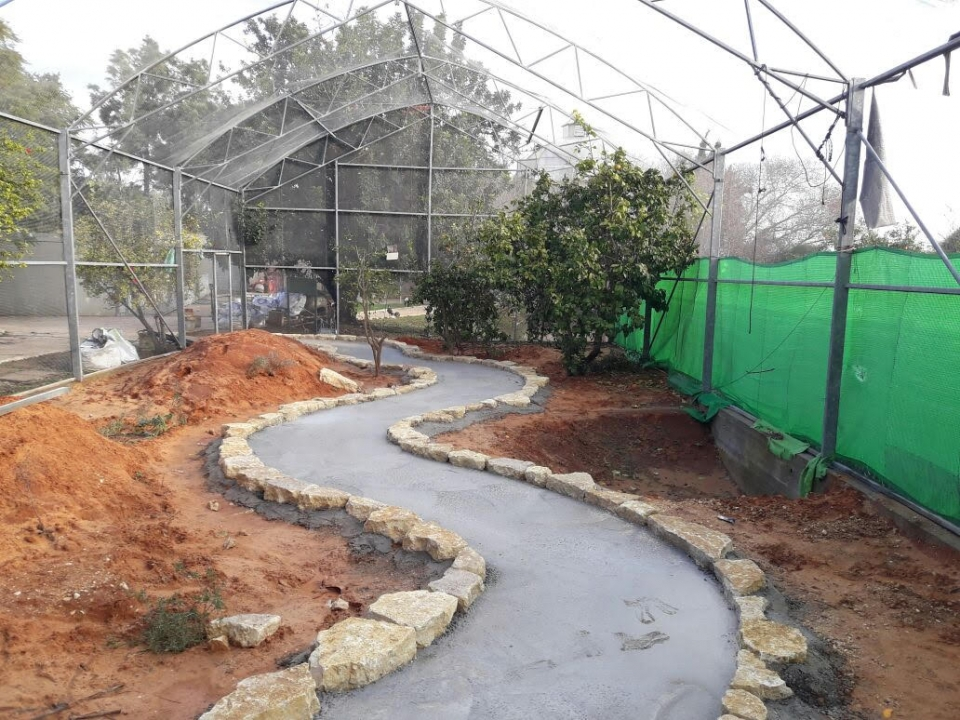 Building a new aviary, photo: Ron Elazari-Volcani