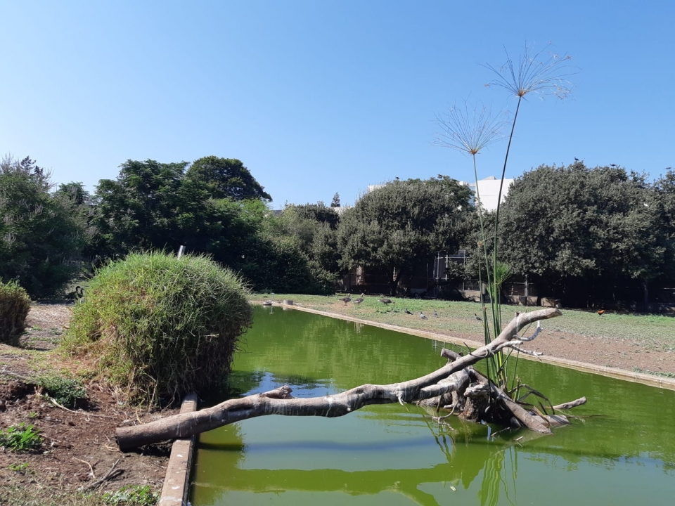 An artificial island in the pond for the welfare  of the cormorants, photo: Nava Schiller